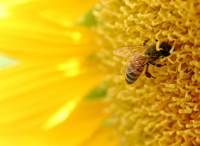 Hogyan segítheti a méhpempő a teherbeesést?